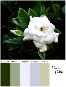 Palette 1 Gardenia